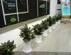 长沙市专业室内绿植,花卉租摆,全城免费配送!