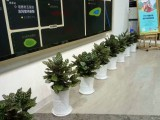长沙市专业室内绿植,花卉租摆,全城免费配送