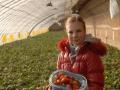 一枝红杏创意农场草莓采摘
