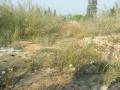 凤塘大窖路边约800平方米已垫土空地出租