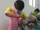 太原顶 尖宠物美容学校--华北区专业的宠物美容学校