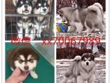 郑州宠物店免费领养宠物狗