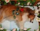 上海宠物火化 宠物殡葬