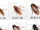 专业灭四害,灭老鼠、蟑螂、蚊蝇、保洁、除甲醛等