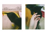 出售普通小黑猫