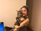 保定Miss名猫馆现寻合作猫舍、水吧、咖啡馆