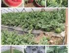 端午节 上海周边农家乐推荐 采西瓜摘桑葚 烧烤划船钓龙虾