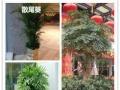 康熙园艺绿植租摆,单位租花、园林绿化、花卉景观