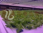 成都前海华康生物免洗蔬菜上市 成都前海华康免洗蔬菜展示
