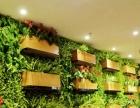 烟台花卉:烟台绿植、花卉租赁、绿植租摆
