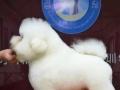 枣庄 徐州时尚精英宠物美容学校是由世界犬业组织FCI指定学校