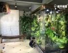 长沙雨林缸 鱼缸 水草缸 植物墙庭院找 植来植趣