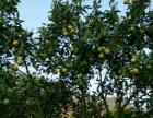 爬山赏流溪与猴同乐+温泉别墅+水果采摘好去处特价