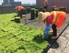 丽芳园林,绿植服务 绿化养护 景观设计 绿化工程