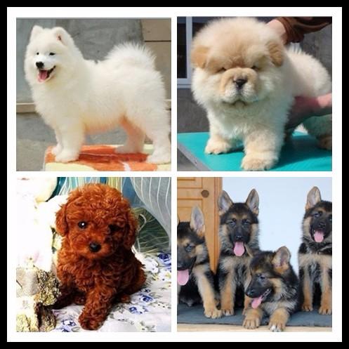 漳州宠物领养中心 大量狗狗免费送人
