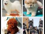 北京宠物领养中心 大量狗狗免费送人