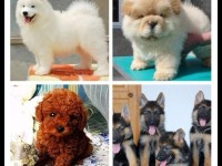 长沙宠物领养中心 大量狗狗免费送人