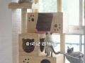 家庭式猫寄养服务免费上门接送
