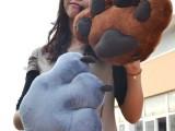 新品上架!熊掌暖手捂/大手套 熊爪子毛绒玩具靠垫/抱枕