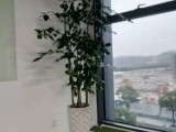 杭州未来科技城绿植花卉租摆租赁配送