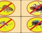 水东白蚁防治灭白蚁四害消杀就是鹰灭