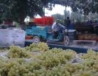 葡萄采购代理--优质服务