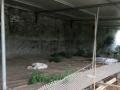 出租皇镇原生态垂钓园30亩水面