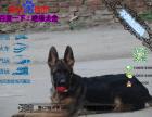 哪里有专门养德国牧羊犬黑背的 纯种的多少钱一只