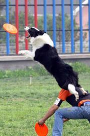 苏州训犬训狗专业基地排便训练服从训练随行训