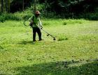 专业承接荒地除草专业除杂草野草草坪修剪维护药物除草