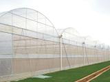 极好的连栋温室哪里有,连栋薄膜温室建设