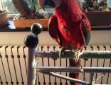 門頭溝鸚鵡訓練