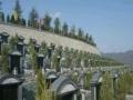 重庆较大,规划较好的生态公墓,风水宝地