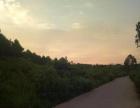 600亩优质土地沙糖桔土地出租