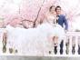 皮肤黑的新娘拍婚纱照技巧/临沂婚纱摄影