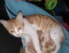刚出生的小猫找人领养, 欢迎爱猫的人事与我联系!