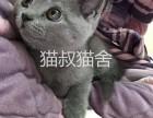 南京正规猫叔猫舍纯种英短蓝猫价格便宜可上门