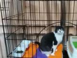 深圳猫咪寄养家庭式猫咪寄养宠物寄养早晚视频上门接送