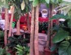 长沙绿植租赁、开业租赁、盆栽出售、活动租赁预定中