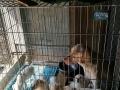 狗不养了低价出售狗笼子