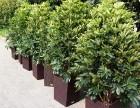 苏州绿植租摆,花卉绿植租售,植物租摆公司
