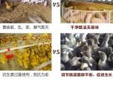 益昊生物 1000亿全水溶枯草芽孢杆菌 畜禽饲料添加剂