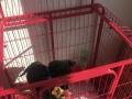 狗狗长大9成新狗笼出售