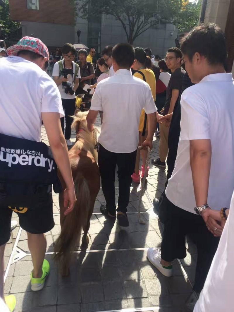 上海小矮马出租房地产开盘庆典展览暖场