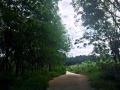 海南琼海万泉河上游土地转让 林地出售