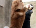 许昌大狗场阿拉斯加犬等几十个狗品种,可视频看狗,送货