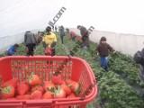 上海農家樂一日游 采草莓送桔子 吃土菜釣大魚