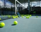 三亚网球教练培训及陪打陪练