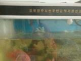 出售 红鹦鹉鱼和1.2鱼缸