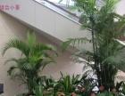 绿植盆栽 绿化工程、写字楼、办公室绿植摆设设计
